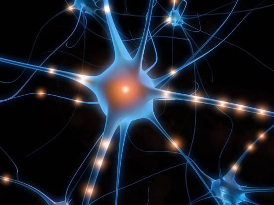 Neural+Pathways